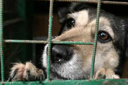 chien-refuge
